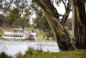 River Redgum on the Murray River